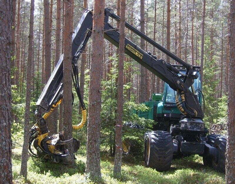 Exploitation forestière abateuse ébrancheuse (1)