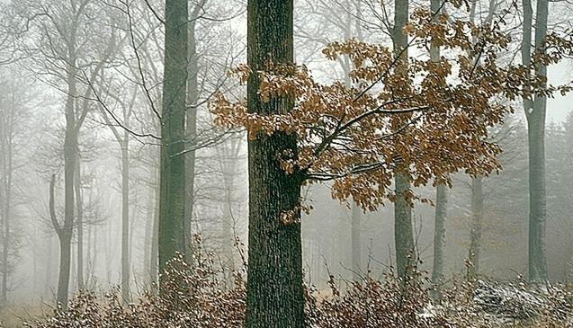 forêt4