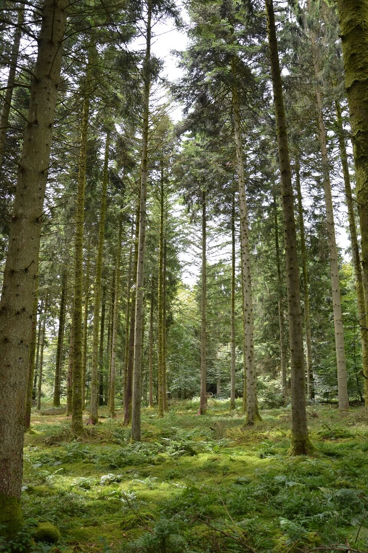 Exploitation forestière Libramont 2013 (22)